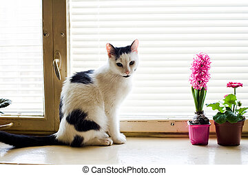 Cat on the window - An image of a cat sitting on the window