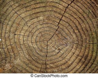 árvore, tronco, seção, fim, cima