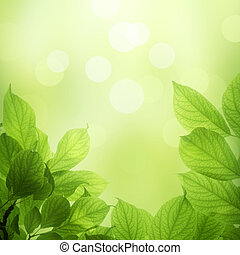 fresh and green leaves - beautiful soft green background...