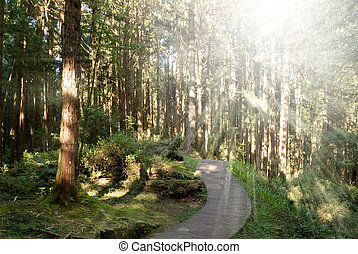 Path in forest with sunlight from trees in Alishan National...