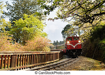 Forest train on railway with sakura in Alishan National...