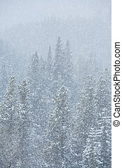 Blizzard in the forest 02 - Heavy snowfall in a Rocky...
