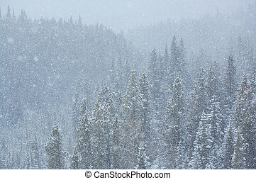 Blizzard in the forest 01 - Heavy snowfall in a Rocky...