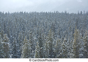 Snowfall in the forest 01 - Heavy snowfall in a Rocky...