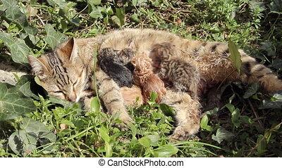 10 minutes old newborn cat is drinking milk