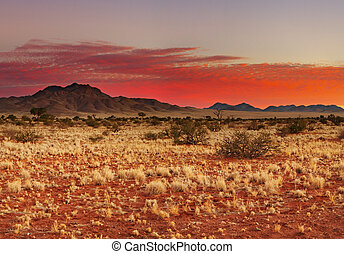 Kalahari Desert - Colorful sunset in Kalahari Desert,...