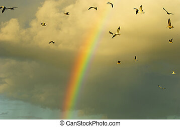 Rainbow and flying birds - gull, rainbow and flying birds.