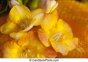 freesia - yellow freesia on orange ribbon as background