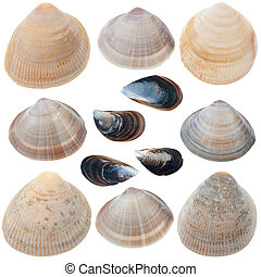 Detailed sea shells - Collection of detailed sea shells...