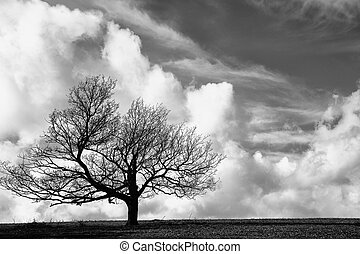Cliche tree on hill with beautiful blue sky background in...