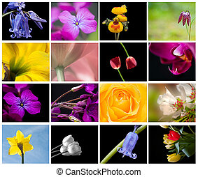 Bright colorful Spring flower storyboard collage - Lovely...