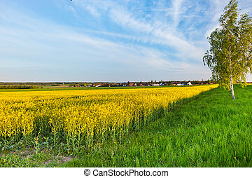A summer landscape at sunset in Niedersachsen