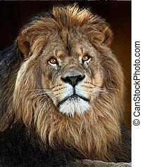 el, león, King3