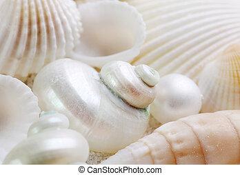 blanco, Conchas marinas, cierre, Arriba