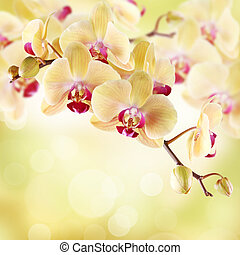 Yellow orchid on a light background