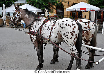 Horses on the market - Horses with carriage on the market in...