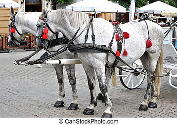 Horses on the market