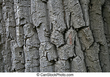 Cortex - Closeup shot of cortex of big old tree