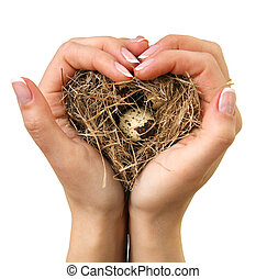 Bird nest in hands on the white background isolated