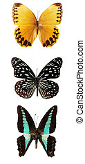 Butterfly on the white background, (isolated)