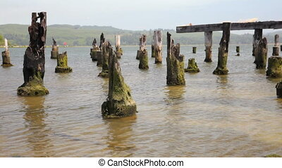 Pier Pilings - Remains of an old Pier, Coos Bay, Oregon