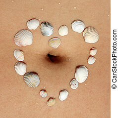 heart, sea, shells, woman's, abdomen