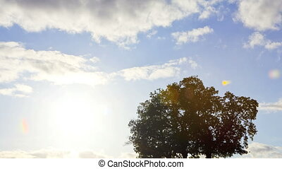 Oak Tree Silhouette, Time Lapse - Oak Tree in silhouette,...