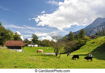 Swiss country side scenery