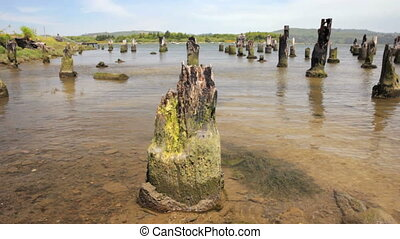 Pier Pilings - Remains of an old Pier, Coos Bay, Oregon,...