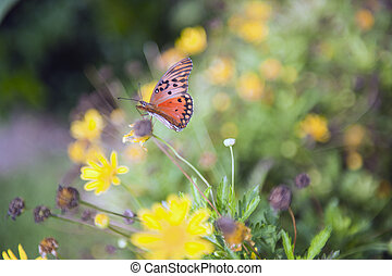 Butterfly on a freen and beautiful backgraund