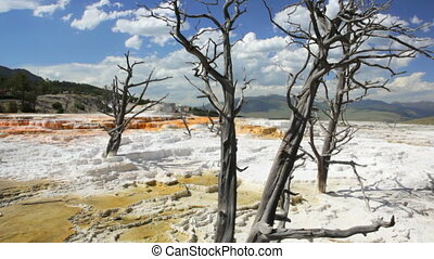 Mammoth Hot Springs - Dead trees in Canary Springs,...