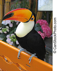 Toucan bird on orange bench