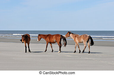 Horses on the Beach - Wild horses on the beach at Cumberland...
