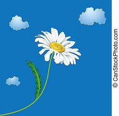 ox-eye daisy - illustration of the ox-eye daisy against sky...