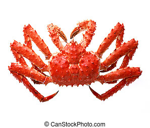 Appetite isolated crab for your designs