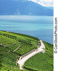 Famous vineyards in Lavaux region against Geneva lake. Switzerland