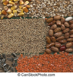 collage of cereals, corn, lentils, beans