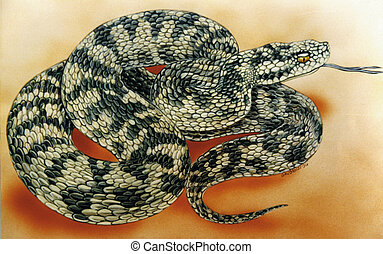 snake, coiled, poisonous