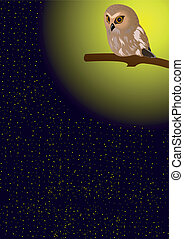 Owl in the night sky