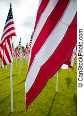 American flags on Memorial Day - American flags on a green...
