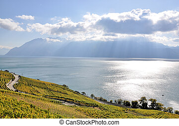 Vineyards in Lavaux region at Geneva lake, Switzerland