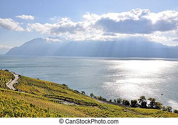 Vineyards in Lavaux region at Geneva lake, Switzerland