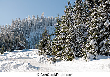 Fresh snow at Snoqualmie summit - Fresh snow at Snoqualmie...