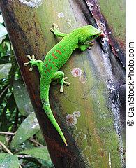 madagascar, árbol, Palma, verde,  gecko, día