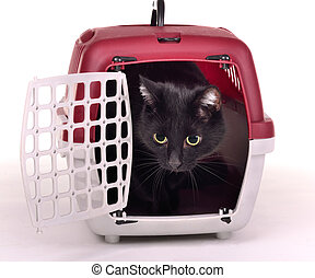 Cat looking out cautiously of its travelling cage isolated...