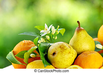 Rocha pear and oranges.