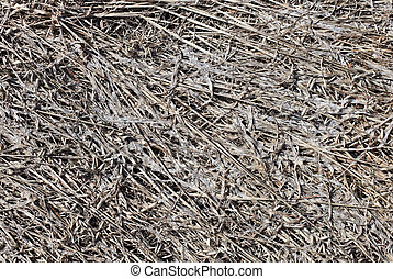 Gray old dead grass nature background