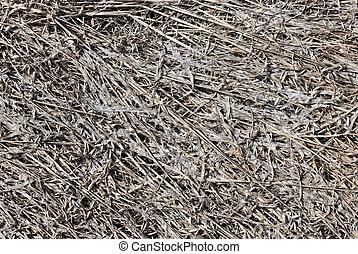 grigio, vecchio, natura, morto, fondo, erba