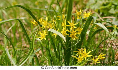 spring yellow flowers