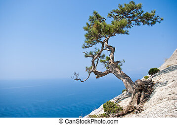 Lone fir tree at edge of the cliff Sea and skies in...